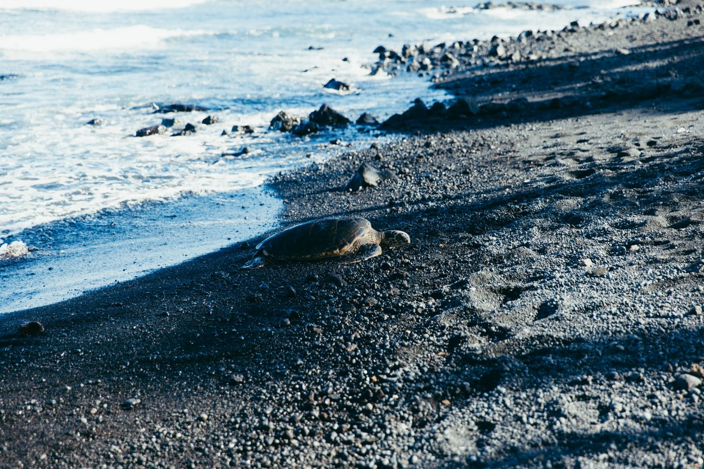 Turtle on the sand, Punaluu Black Sand Beach, Big Island, Hawaii