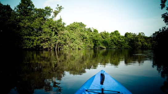 From the canoe, one felling: the calmness. You let your canoe drifting, hearing at the parrots' screech and the music of the birds singing …