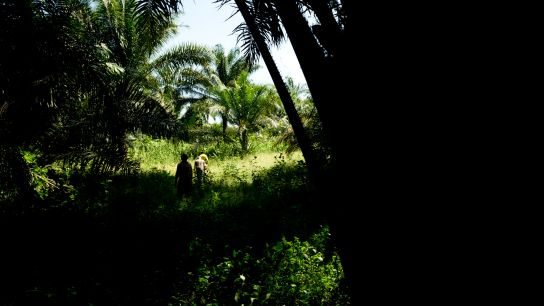 Luxuriant vegetation, gigantic … palm trees, hundred-year-old trees …