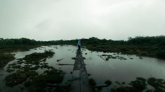 Crossing Alakai Swamp, Koke'e State Park, Kaua'i, Hawaii