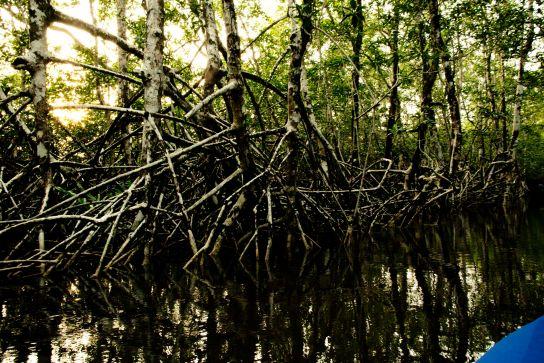 Épisode 3: Canoë dans la mangrove de Douala