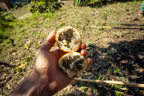 Passion fruit, soooo good!