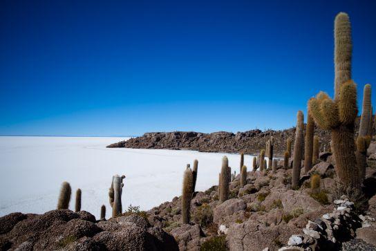Isla Incahuasi, Salar de Uyuni, Bolivie
