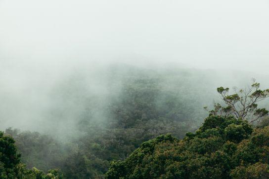 Clouds, Trees, Kalalau Valley, Koke'e State Park, Kaua'i, Hawaii