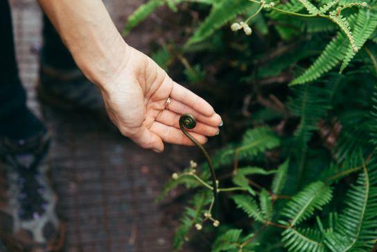 Green plants, Koke'e State Park, Kaua'i, Hawaii