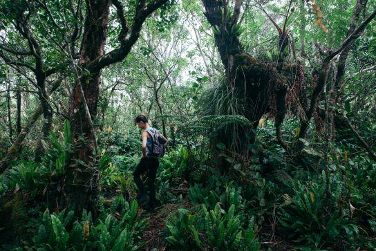Woman walking in a tropical forest, Koke'e State Park, Kaua'i, Hawaii