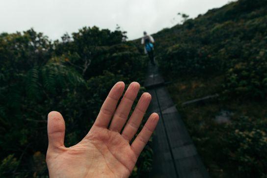 Wrinkly hand by the moisture, Alakai Swamp, Koke'e State Park, Kaua'i, Hawaii