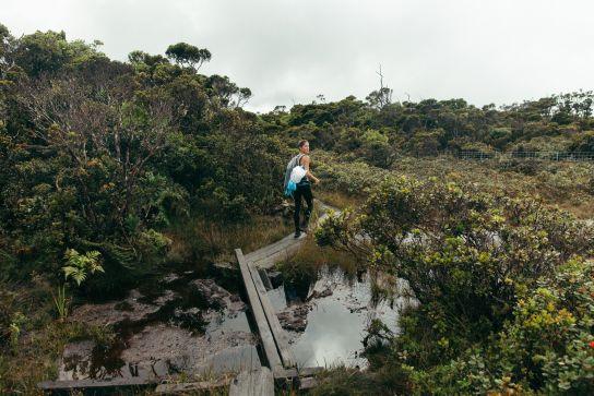 Woman crossing Alakai Swamp, Koke'e State Park, Kaua'i, Hawaii