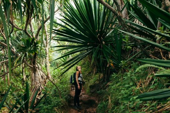 Giant leaves and woman, Kalalau Trail, Kaua'i, Hawaii