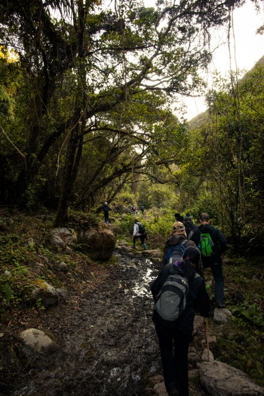 Jungle, Salkantay Trek, Peru