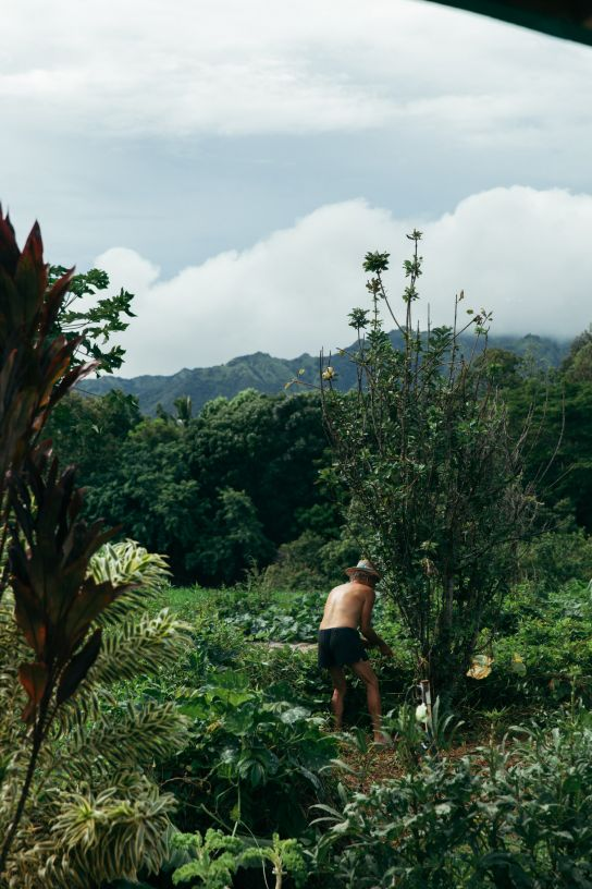 Man gardening, Kauai, Hawaii