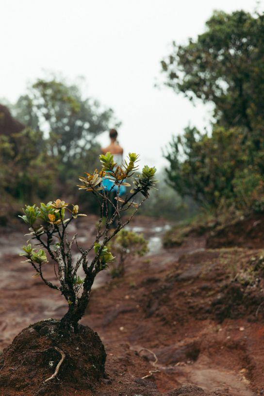 Plantes verts, Brume, Kalalau Valley, Koke'e State Park, Kaua'i, Hawaii
