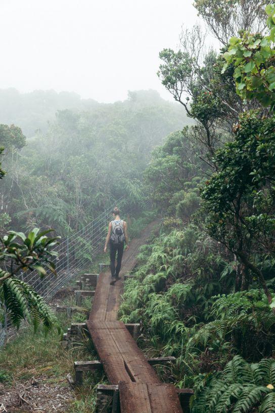 Femme marchant dans la brume, Koke'e State Park, Kaua'i, Hawaii