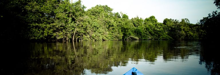 Episode 3: canoeing in the mangrove swamp of Douala